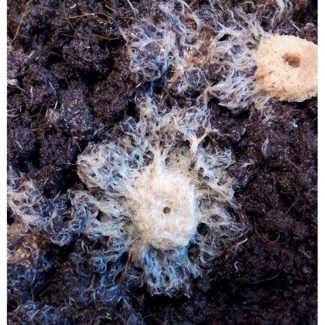 Cultivo gusano grindal (tarrina 200 ml)