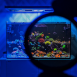 Coral-Colour-Lens-Tristan-1_0