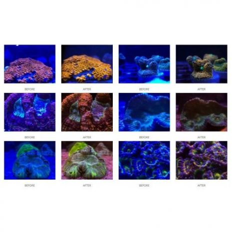 CoralLens2X500X500X