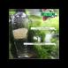 Dispensador alimento vivo y congelado (SunSun)