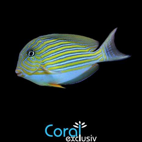 peces-3.jpg