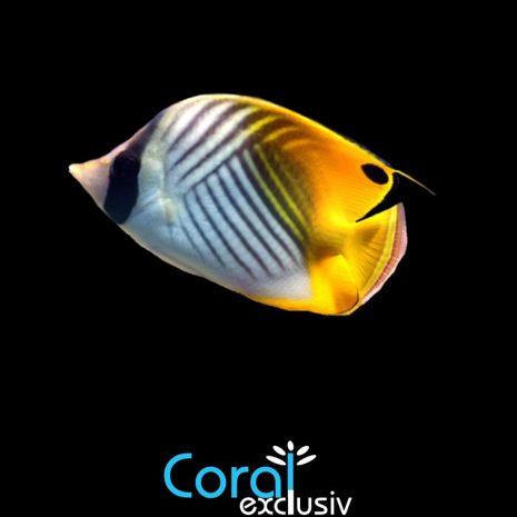 peces-4-4.jpg