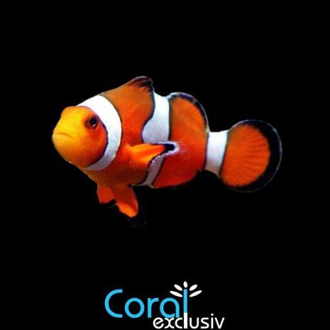 peces-4.jpg