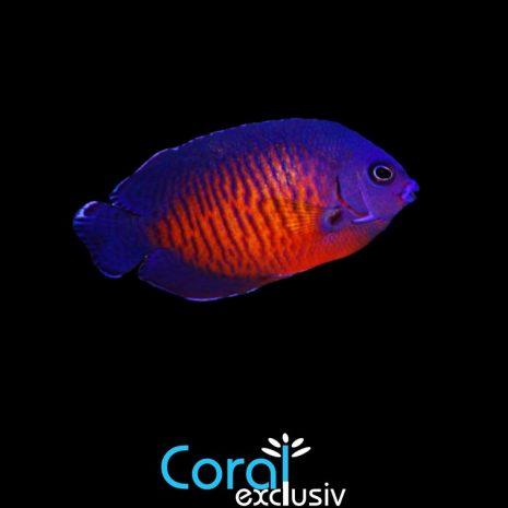 peces-4-5.jpg