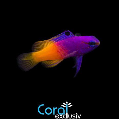 peces-4-6.jpg