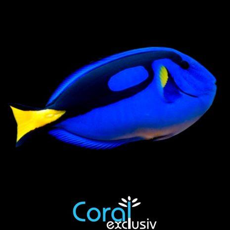 peces-7.jpg