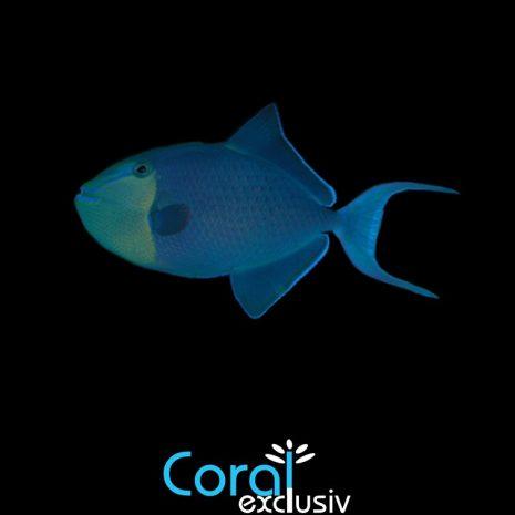 peces-nuevos-4.jpg