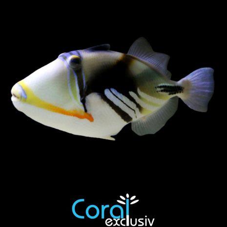 peces1-2.jpg