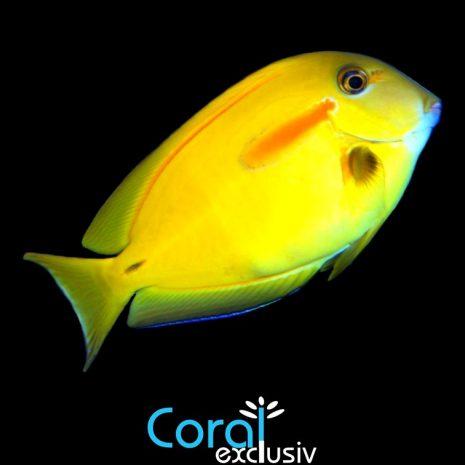 peces1-3.jpg